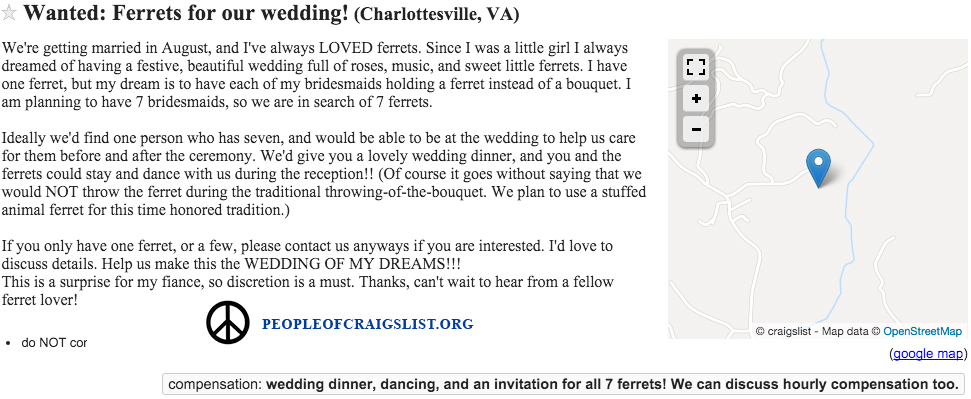 Craigslist Ferrets for our wedding