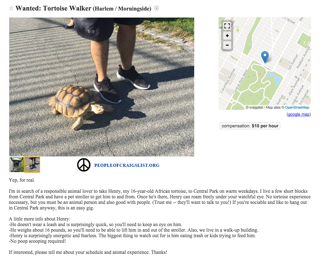 Craigslist Turtle Walker Wanted