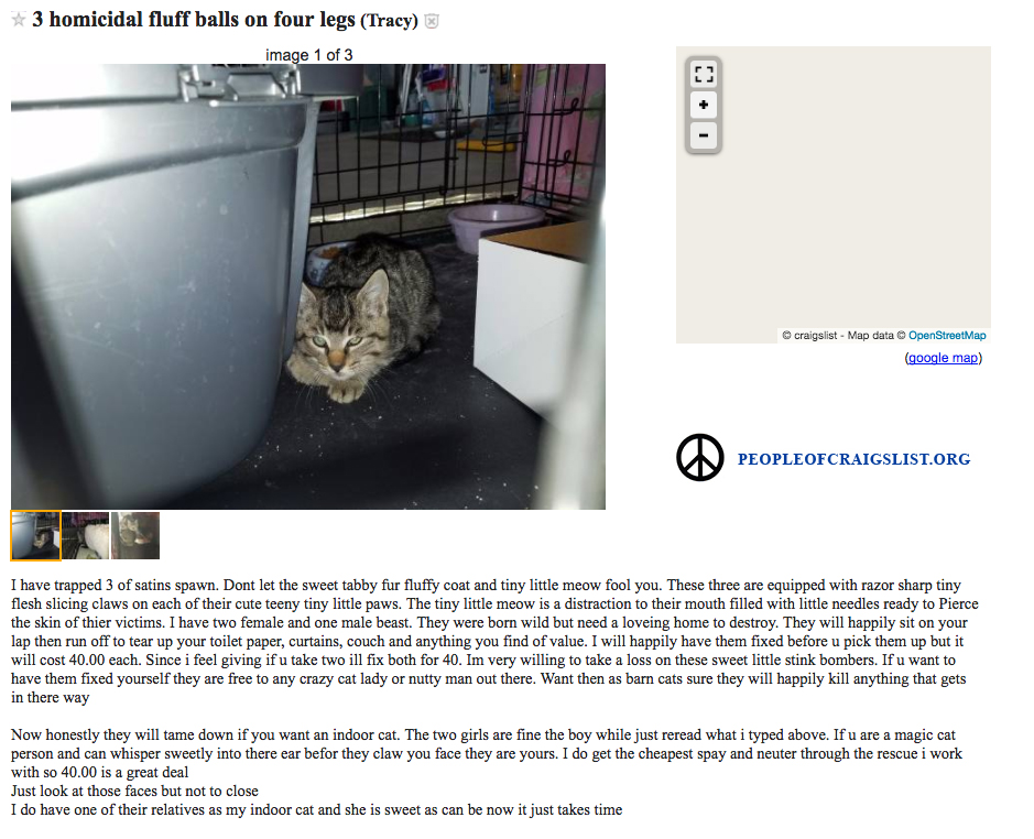 3 homicidal fluff balls aka cats on craigslist