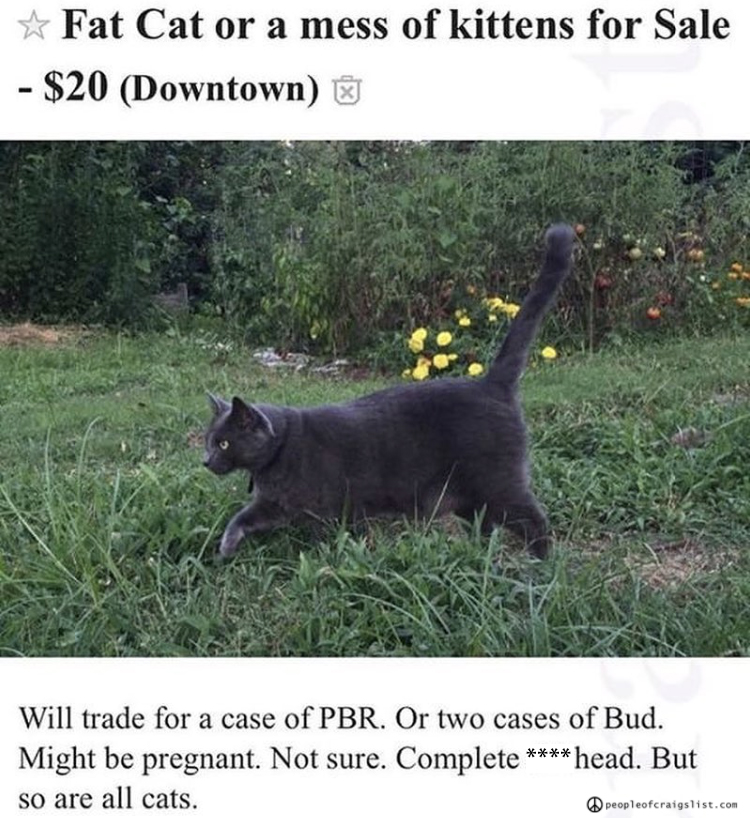 Will trade cat for case of PBR - People of Craigslist