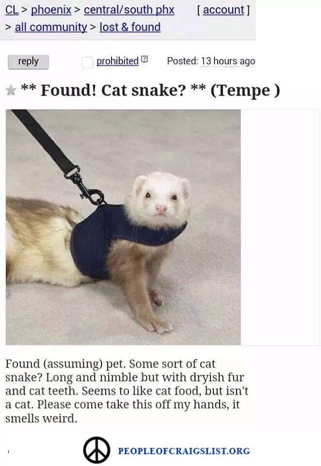 Craigslist Cat Snake