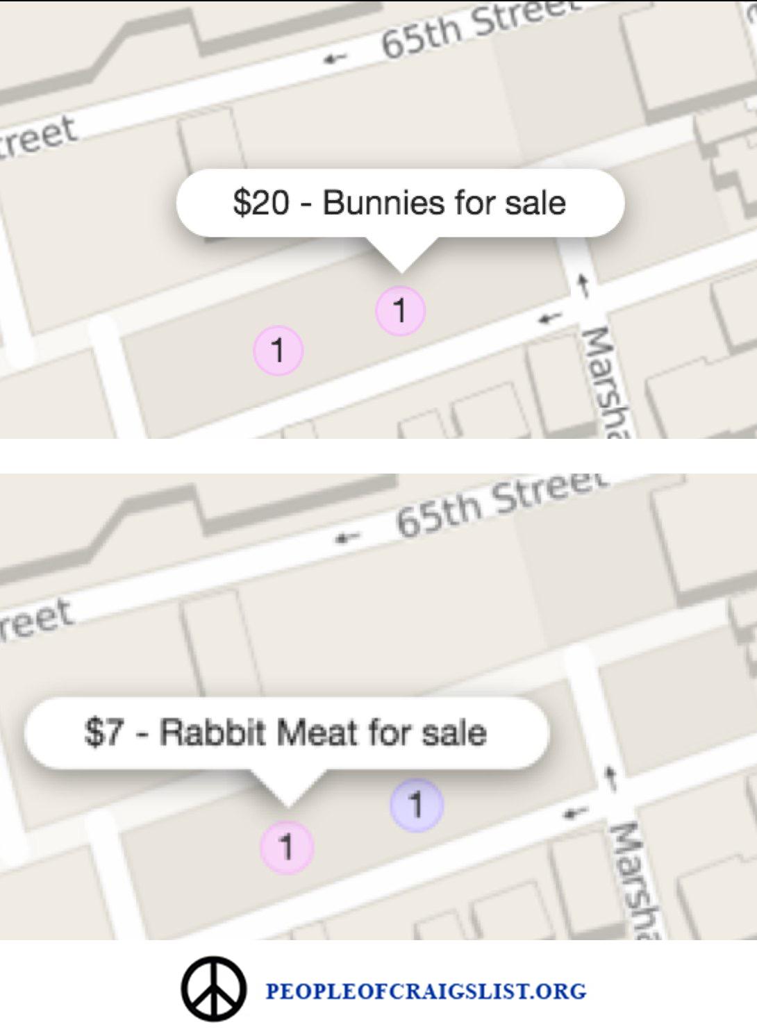 Bunnies for sale on craigslist